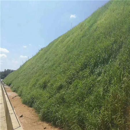 江苏园林景观公路护坡喷浆工程